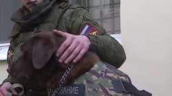 Une armure pour chien d'assaut après la mort de