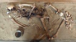Ανακαλύφτηκε η πρώτη τρανσέξουαλ στην ιστορία. Ο σκελετός που έχει DNA και άνδρα αλλά και