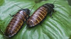 Τώρα μπορείτε να δώσετε και επίσημα σε μια κατσαρίδα το όνομα του πρώην