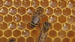 Beesness Better: Μια startup για τη βελτιστοποίηση της μελισσοκομικής