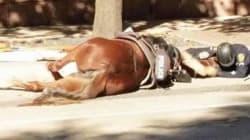 Αστυνομικός παρηγορεί το άλογό του που ξεψυχάει στον δρόμο του