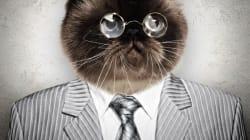 Municipales en Sibérie: un chat en tête des