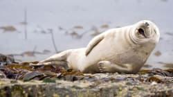 Όταν τα ζώα της άγριας φύσης σπάνε πλάκα και άλλες 4 τρομερές viral ειδήσεις της