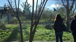 [동물원에 가다] 동물이 보이지 않는