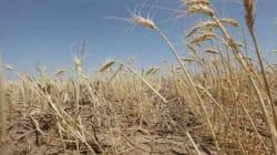 Douceur du climat, rareté des pluies: dans le monde rural, la situation commence à