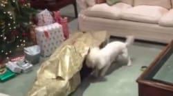 강아지를 위해 특별한 크리스마스 선물을