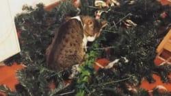 15 ζώα που κατέστρεψαν τα Χριστούγεννα των αφεντικών