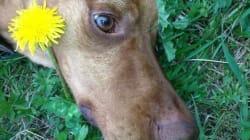 Gaston Vizsla: Gemeinsam kämpfen für die Hunde von