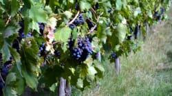 Ten Vineyards You Must Visit in the Next Five