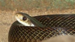 10 επικίνδυνα πλάσματα της αυστραλιανής γης (και