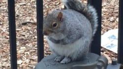올겨울에 뚱뚱한 다람쥐들이 많이 목격되는
