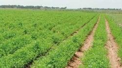 Polémique après la signature d'une assurance agricole entre Saham et les ministères des Finances et de