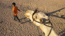 Η Αίγυπτος, οι καμήλες κι εγώ (Part