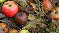 Can a Derbyshire Town Lead a UK Food Waste