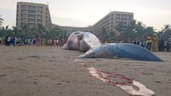 Let's Listen To The Dead Whale On Juhu
