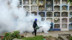 Zika: l'OMS décrète