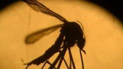 Zika: le monde s'inquiète, l'Amérique latine se