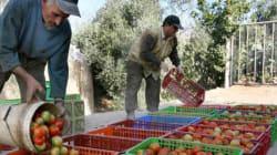 L'Union Européenne ne va pas revoir son accord avec le Maroc sur l'importation de