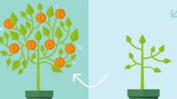 Crowdfunding et éco-entrepreneuriat: Un couple qui a de l'avenir au