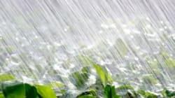 Les récentes pluies redonnent espoir aux agriculteurs