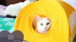 목 늘어난 티셔츠로 고양이 텐트를 만드는