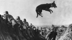 Είναι ο «Σατανάς»: Ο σκύλος αγγελιοφόρος που έγινε η ψυχή της πολύνεκρης μάχης του