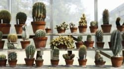 Ces plantes d'intérieur sont à peu près