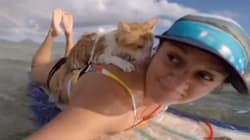 Ο μονόφθαλμος γάτος που λατρεύει το σέρφινγκ και τη θάλασσα και άλλα 7 ζώα που αγαπούν την