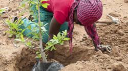 Baobab Ökologie: Starthilfe für