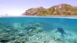 La Grande barrière de corail présente des signes de