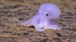Découverte d'une pieuvre