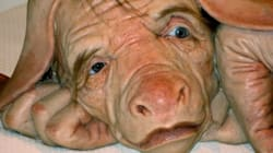 Pigs: Mirrors Of Humanity Through The