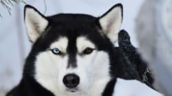Πως ήταν ο σκύλος σας πριν από 100 χρόνια; Δείτε πόσο έχουν αλλάξει οι πιστοί μας φίλοι μέσα σε έναν