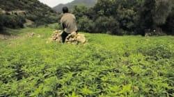 Le cannabis au centre d'un colloque international organisé à