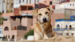 Pourquoi Ksar El Kbir ne doit pas devenir un lieu d'extermination des animaux