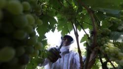 Αγροτικός Οινοποιητικός Συνεταιρισμός Τυρνάβου: Να πως κατάφεραν να «ταξιδέψουν» το τσίπουρο τους από την Κίνα ως την