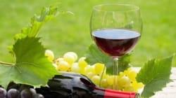 12 bons vins bio à moins de 20