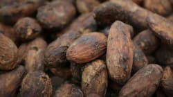 Is a Pastry Chef the Right Person to Reinvent Cacao Fermentation