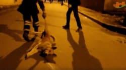 Les images extrêmement choquantes du massacre des chiens à Ksar El Kébir