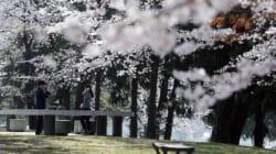 전국 5개 벚꽃축제에서 갈 수 있는 맛집