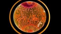 박테리아로 그린 이상하고도 아름다운