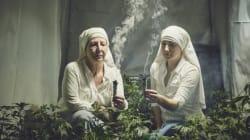 마리화나 키우는 수녀들은 신의 부름에 답하고