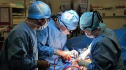 Les premières greffes auront lieu dans un mois à l'Institut national du rein de