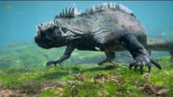 Ιγκουάνα - «Γκοτζίλα» προκαλεί τρόμο στο