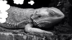공룡도 꿈을 꿨다는 최신 연구가 중요한