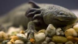 Τα πέντε πιο άσχημα ζώα που κινδυνεύουν με