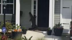 Αλιγάτορας «χτυπάει το κουδούνι» σπιτιού στη Νότια