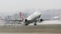 공항이 새를 학살하지 않게 막아주는 기술이