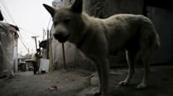 한국 유기동물에 관한 통계