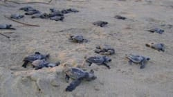 India's Turtles Are Dying, But We Can Help Save